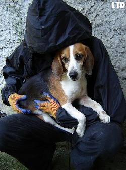 sauvetage des animaux domestiques de france