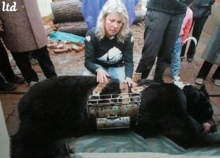 Chine : Une mère ours emprisonnée à vie tue son fils et se suicide